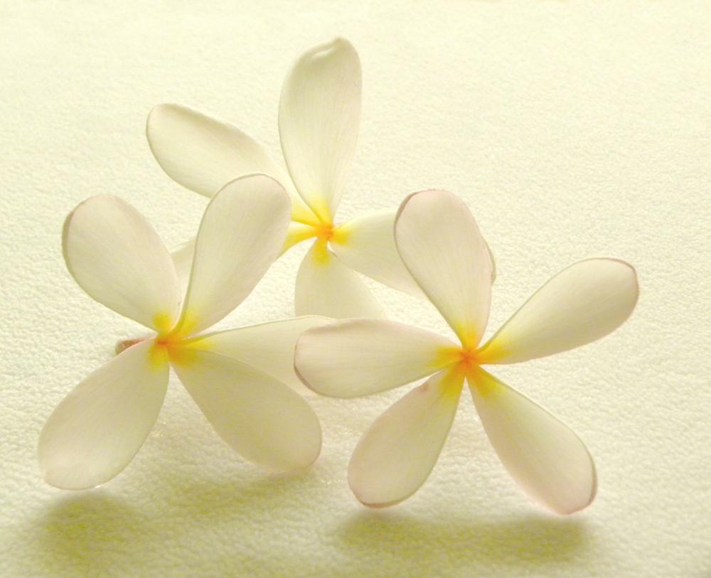 Hawaii trip-Plumeria